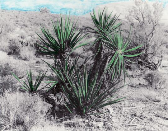 Desert by Bryan