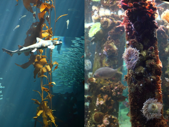 Left: Kelp Forest     Right: Ocean's Edge