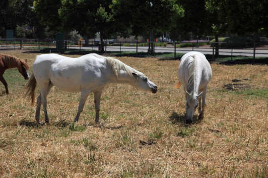 Kellogg horses